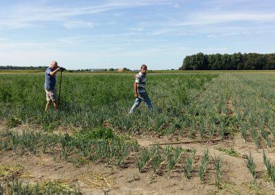 onze boerderij onkruid wieden