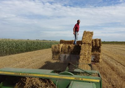 onze boerderij tarwestro
